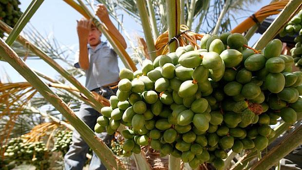palesztin gyerek dolgozik
