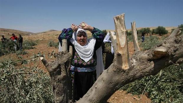 palesztin asszony olajfa