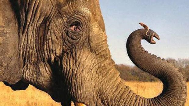 elefánt és kisegér