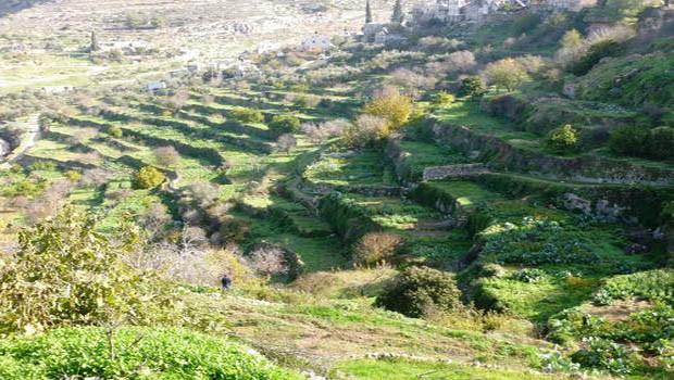 jerikó földje