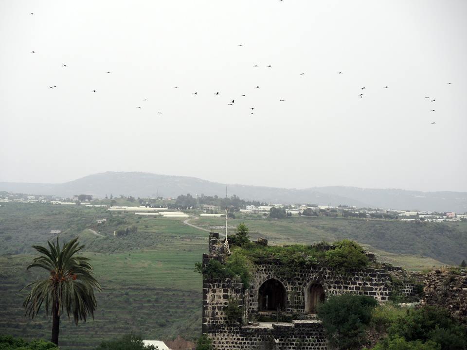 A gólyák megelőztek minket a hazatérésben