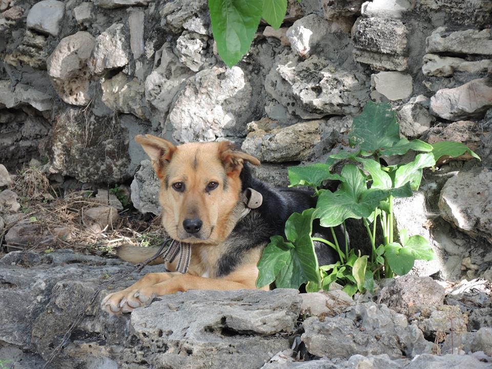 Liza kutya vigyázott a szállásunkra