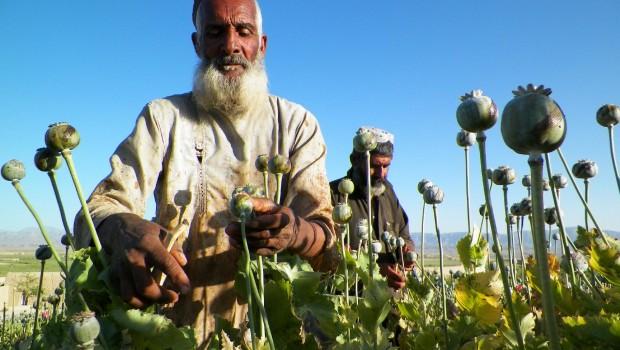 tálibok opium afganisztán