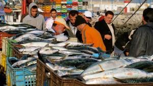 marokko-halaszat-piac