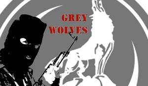 szurke-farkasok