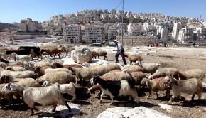 jeruzsalem-lakotelep-izrael-palesztina
